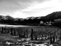Wooldridge Creek Vineyards (Nick Kanta) Tags: blackandwhite bw snow mountains cold ice oregon vines vineyards valley grapes iphone applegatevalley iphoneography wooldridgecreek
