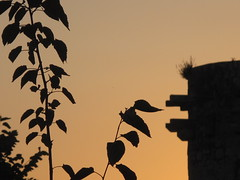 Medieval Tower (Alex L'aventurier,) Tags: light sunset silhouette warm europe lumire couleurs croatia medieval korcula coucherdesoleil croatie mdival teinte chaudes