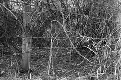 20130204-FTn-B-02032013 22 (alienmeatsack) Tags: camera blackandwhite bw film 35mm iso400 developer diafine yashica assorted ilfordhp5plus fixer electro35 nikkormatftn tf5