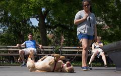 Summer 2016 (Scoboco) Tags: gothamist nycsummer washingtonsquarepark timessquare christopherstreetpier tompkinssquarepark columbuscircle sheepmeadow centralpark nycparks summernyc
