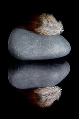 Feather Lying Heavy on Stone (KellarW) Tags: stone fluffy feather mirrored mirror brownfeather reflection reflected gray grey reflecting riverstone rock light