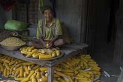 Farmer Yangrong Pakhrin, 70 years old, shelling maize on his verandah in Gharcau, Kanchanpur. (CIMMYT) Tags: nepal csisa cimmyt maize agriculture smallholder farmer mechanization asia