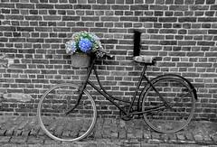 Pré hightech (johan van moorhem) Tags: belgium belgique belgië flanders vlaanderen westvlaanderen oedelem beernem farm hoeve boerderij fiets damesfiets vintage openmonumentendag2016 openmonumentday2016