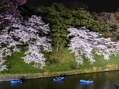 Chidorigafuchi IV (Douguerreotype) Tags: cherry three blossom tree cherryblossom blue lights city night tokyo 3 pink boat sakura japan water people dark river