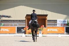 IMG_7621 (dreiwn) Tags: dressage dressur dressuur pferd reitturnier turnierreiten pferdesport horse horseback horseriding equestrian reitverein dressurprfung kandare doublebridle reiten pferde reitplatz ridingarena