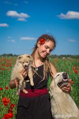 IMG_0878-Edit (giraffes_fly) Tags: poppies poppyfield poppy poppydog poppygirl poppylover inpoppies summer