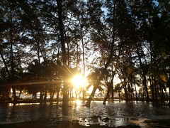 Avani (bdrc) Tags: avani sepang gold coast resort malaysia seremban sunset beach park tree asdgraphy zenfone2 smartphone handphone mobilephone