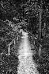 The Path - HFF! (suzanne~) Tags: fence wood forest trees stream bw blackandwhite monochrome outdoors path