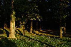 Last light in Marinsk mln park (Gregor  Samsa) Tags: czech czechrepublic eskrepublika ceskarepublika czechia plava czechland czechlands cesko esko bohemia moravia hike hiking walk walking nature outdoors outdoor adventure palava mikulov last light sunset evening twilight lastlight tree trees marinskmln marinsk mln park