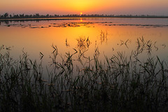 Last Colours Of The Day (Amir Mukhtar Mughal | www.amirmukhtar.com) Tags: pictures flowers pakistan light sunset red orange plants plant flower reflection green nature water colors beautiful grass leaves yellow canon river landscape golden pattern colours shadows waterlily lily image photos patterns scenic images hues amir ripples punjab pads jhang mughal mughals riverjhelum pakistanphotos pakistanimages imagesofpakistan pakistaniphotographers pakistaniphotographer amirphotography picturesofpakistan photosofpakistan riverchenab amirmukhtar pakistaniimage photographersofpakistan wwwamirmukhtarcom photographyofpakistan pakistaniimages amp006876