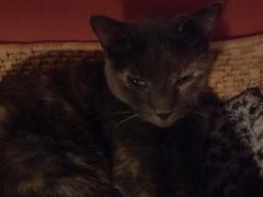 365 Days- 10/16/12 (pnixon18) Tags: family cats santafe home october gina