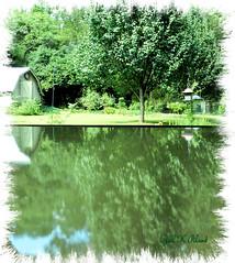 Reflection (gailpiland) Tags: reflection green yard garden photo reflectyourworld gailpiland exoticimage flickrstruereflectionlevel1 rememberthatmomentlevel1
