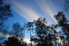 Breathless (Chris Lishman) Tags: longexposure trees sky silhouette clouds silhouettes northumberland bolam chrislishman