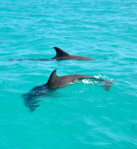 dolphins-key-west-baby-209 by M.-J. Taylor, on Flickr