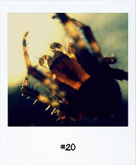 "#DailyPolaroid of 18-10-12 #20 • <a style=""font-size:0.8em;"" href=""http://www.flickr.com/photos/47939785@N05/8108414434/"" target=""_blank"">View on Flickr</a>"