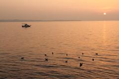 Piran & Portoroz, Slovenia ( Philipp Hamedl) Tags: sea oktober water meer wasser slovenia piran slowenien 2012 portoroz