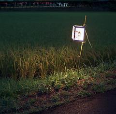 (shimobros) Tags: film night rice kodak bronica chiba squareformat ricefield sq portra 800 basic    zenza