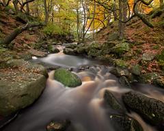 Padley Autumn i (Terry Gibbins) Tags: autumn tree waterfall gorge padley