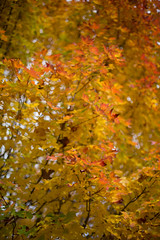 Fall Colors Bokeh and Vignette [SOOC] (Will shoot for lenses) Tags: autumn trees fall leaves october flickr bokeh outdoor depthoffield redmond manual manualfocus 2012 lightroom ef50mmf14usm sooc topazadjust topazdenoise canoneos5dmarkiii