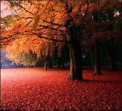 The story of October (Marie Granelli) Tags: autumn tree skne october sweden explore trelleborg sdersltt nikons8000