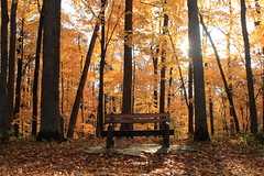 Have a seat in Autumn (Cole Chase Photography) Tags: autumn fall forest canon bench gold october fallcolor iowa fallfoliage mountvernon palisadespark t3i goldenleaves goldleaves autumnforest mountvernoniowa palisadeskeplerstatepark autumnbench linncountyiowa