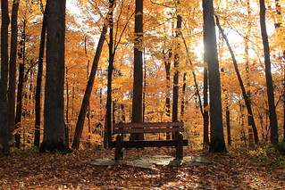 Have a seat in Autumn