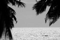 Carapibus-Conde-PB out2012 59.JPG (|$$d LC) Tags: luz sol praia brasil pessoa do amor natureza whippet da lua conde marta helena bela litoral pousada sul joao ferias paraiba maceio nudismo naturismo alessandro arcos pelada enseada lucena tiba tabatinga tambaba medeiros coqueirinho carapibus jacuma whipet aruana