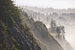 Layers of the Oregon Coast (benalesh1985) Tags: ocean cliff mist tree fog oregon landscape coast rocks pacific or coastline layers cannonbeach douglasfir