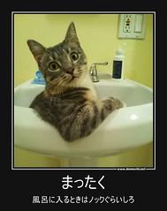 まったく 風呂に入るときはノックぐらいしろ #ペット #猫 #風呂 (Demochi.Net) Tags: life cute sexy japan fun japanese motivator culture 日本 ペット 猫 demotivator 金 家族 結婚 ゲイ 女 子供 おっぱい 愛犬 政治 社会 巨乳 文化 眼鏡 教育 demotivators 経済 女性 初恋 r18 女子 カップル 子猫 女装 お笑い motivators 会社 少子化 企業 ユーモア 恋 悪い 格差 風刺 一言 デモチ 大喜利
