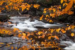 The Masquerade. (JCNixonPhoto) Tags: statepark autumn orange fall yellow river october slow pennsylvania rapids pa waterfalls shutter leafs