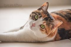 Mimi (criezensilence) Tags: pet cats animal animals cat photography eyes sony kitty mimi gato gata felino petphotography sonya33 focoem4patas