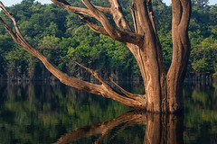 """River Tree • <a style=""""font-size:0.8em;"""" href=""""http://www.flickr.com/photos/55747300@N00/8146286301/"""" target=""""_blank"""">View on Flickr</a>"""