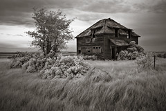 well time and tears went by... (Rodney Harvey) Tags: blackandwhite rural decay windy eerie spooky lilac abandonedhouse northdakota infrared desolate ghostown
