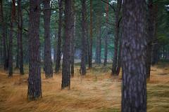 Defective Winter (MagnusL3D) Tags: winter brown tree green tourism nature grass fog pine zeiss forest skne nikon view sweden outdoor bark mystical nordic sverige skane skaane protectedarea makroplanart2100 d800e