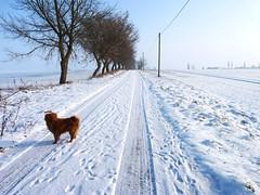 Street in winter (LaWendeltreppe) Tags: street winter mecklenburg snoepje