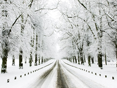 Lime Tree Avenue in the Snow (DaveKav) Tags: road trees snow cold frozen snowy olympus common limes nottinghamshire e510 limetreeavenue