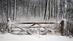 Elongated (Andrew Lockie) Tags: winter snow english bar rural forest woodlands gate day five scene cotswolds typical chipping campden