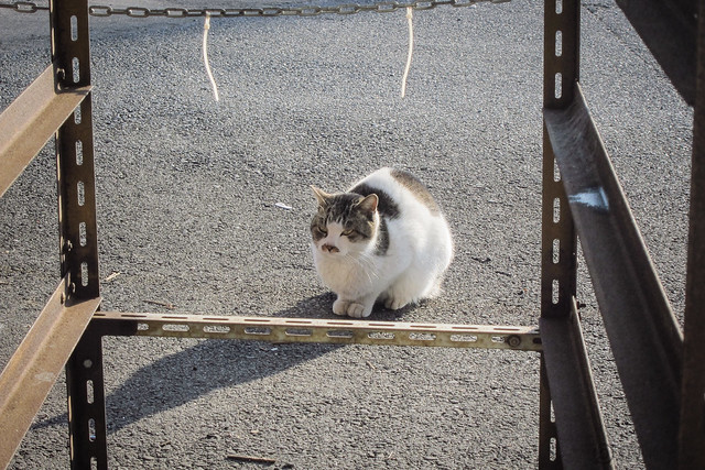 Today's Cat@2013-01-29