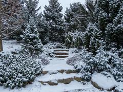 Dwarf Conifer Garden (cotarr) Tags: leica winter snow photowalk geotag chicagobotanicgarden cameraraw poolphoto cs6 vlux3 dwarfconifergarden topazdenoise topazdetail cbgwinter iphonemytracks