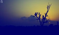 A Summer Eve In The Fields (RJ-Clicks) Tags: rehanjamil rjclicks nikond5100 nikon d5100