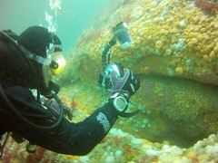 18 July 2016 - Scillies Trip PICT0194 (severnsidesubaqua) Tags: scillies scilly scuba diving
