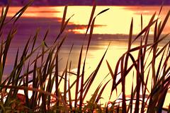 Today will be Tomorrow's Yesterday (Mambo'Dan) Tags: digitalphotopainting digitalart photopainting grassblade sunset water blurred grasslakeside