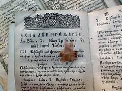 Frozen in time /    (ruta / ) Tags: frozenintime flickrfriday oldbook driedflower cyrillic romanian ukrainian book