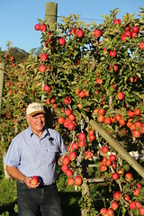 IMG_5951 (mavnjess) Tags: 28 may 2016 harvey edward giblett newton orchards manjimup harveygiblett newtonorchards cripps pink lady crippspinklady popaharv eating apple crunch crunchy biting apples pinklady pinkladyapple harv gibbo orchard appleorchard orchardist