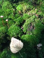 Forest (ekaterinakomarova) Tags: leaf moss green mushroom nature forest