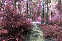 Down in the valley (someoneandthewhale) Tags: forest pink purple magenta plants fantasy unreal road lake trail exploring adventure other planet methane