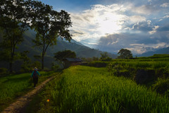 Il viaggio (MicheleSana) Tags: vietnam rice field risaie agosto trip viaggio cammino travel escursioni nikon d3100 summer 2016 estate natura nature wild incontaminata people guida arrivo sunset tramonto cielo sky clouds