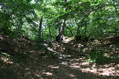 Province Lands Trail (robincagey) Tags: provincetown cape cod massachusetts new england nature trees woods trail province lands nps wildlife