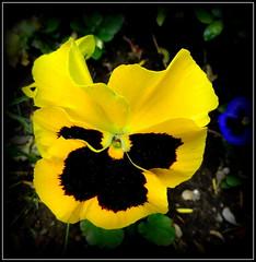 Natural Wonder (dimaruss34) Tags: newyork brooklyn dmitriyfomenko image flower