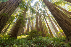 017_7520 (pdxsean) Tags: california crescentcity delnortecounty redwoods smithriver hike